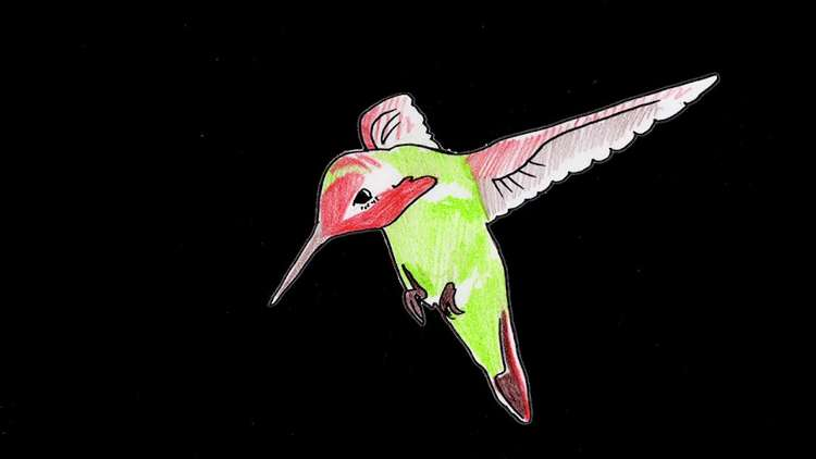 IS TROPICAL - Hummingbird